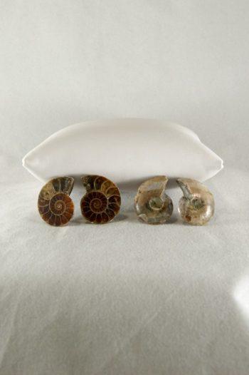 Ammonite Fósil