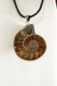 Colgante Ammonite