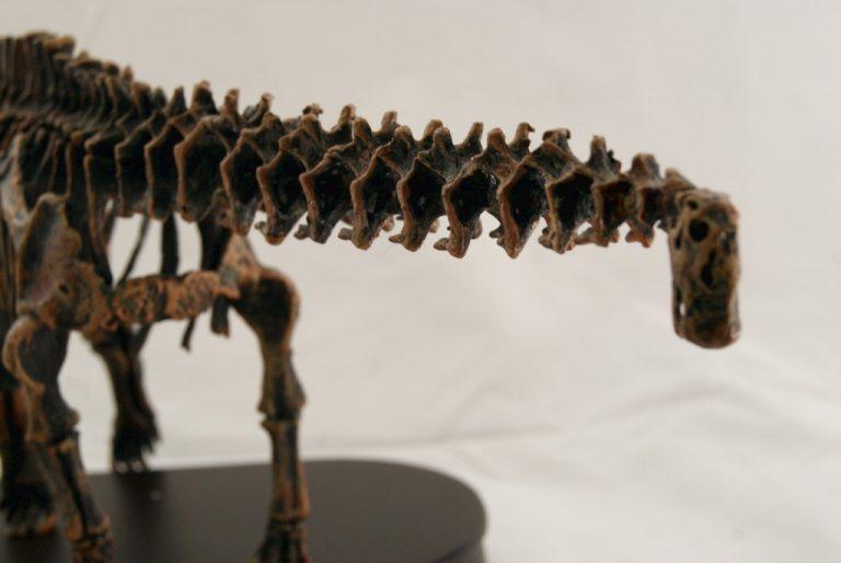 Réplica Esqueleto Apatosaurus