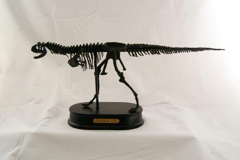 Réplica Esqueleto Carnotaurus