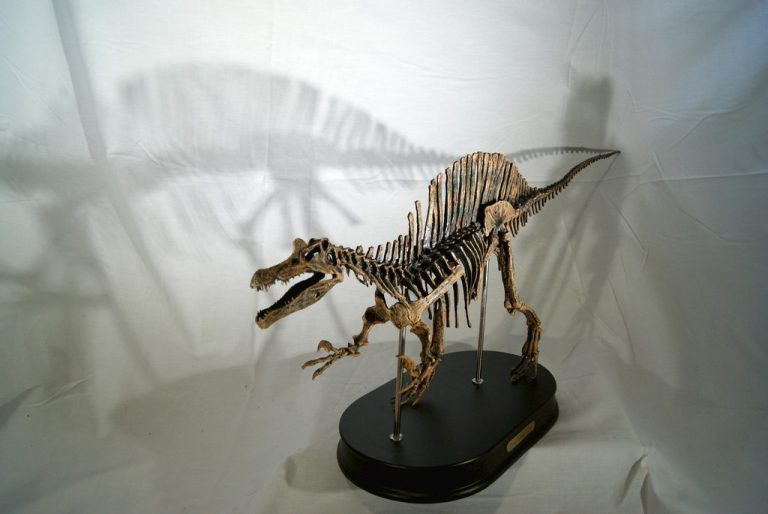 Réplica Esqueleto Spinosaurus