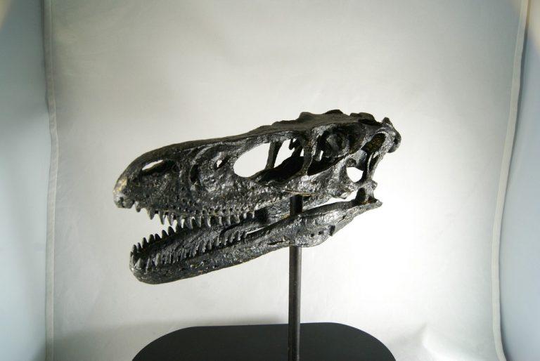 Réplica Cráneo del Deinonychus