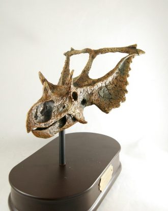 Réplica Cráneo del Chasmosaurus