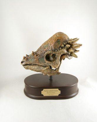 Réplica Cráneo del Pachycephalosauros