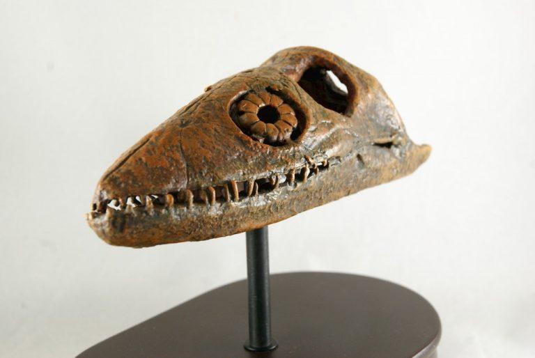 Réplica del Cráneo del Plesiosaurus