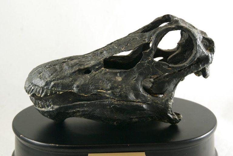 Réplica Cráneo del Diplodocus